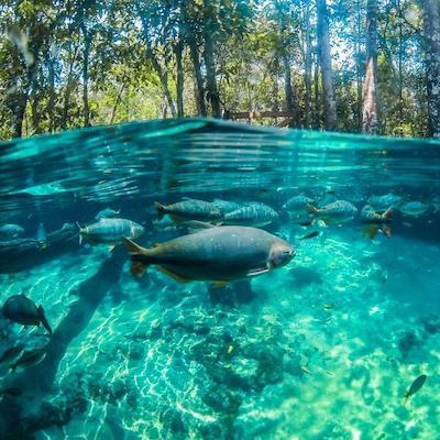 Nobres flutuacao lagoa azul